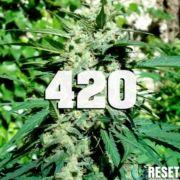 Neutralizador de olor malos olores cannabis tabaco baños gatos perros mascotas Zerum 420 día mundial marihuana